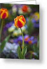 Orange And Yellow Tulip Greeting Card