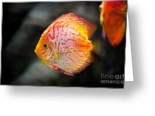 Orange Aquarium Fish In Zoo Greeting Card