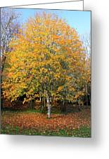 Orange Autumn Tree Greeting Card