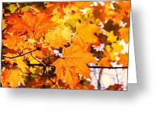 Fall Of Orange Leaves Greeting Card