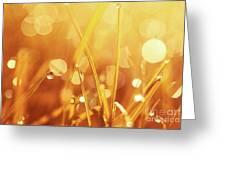 Orange Awakening Greeting Card