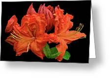 Orange Azalea Greeting Card