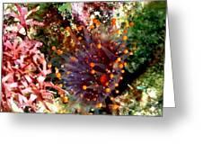 Orange Ball Corallimorph Anemone Greeting Card