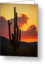 Orange Beautiful Sunset  Greeting Card