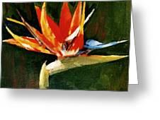Orange Bird Of Paradise Greeting Card