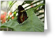 Orange Black Butterfly Greeting Card
