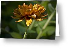 Orange Blanket Flower Greeting Card
