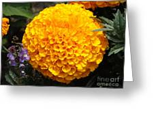 Orange Bloom Greeting Card