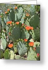 Orange Blossom Cactus  Greeting Card