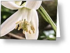 Orange Blossoms #2 Greeting Card