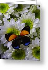 Orange Blue Butterfly On Poms Greeting Card