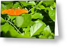 Orange Butterfly On Foliage Greeting Card