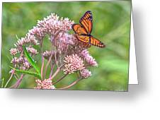 Orange Butterfly Greeting Card
