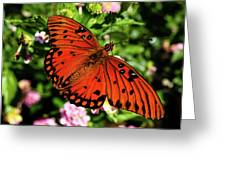 Orange Butterfly Greeting Card by Valeria Donaldson