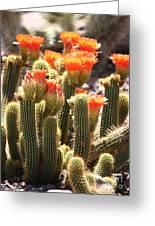Orange Cactus Blooms Greeting Card