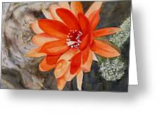 Orange Cactus Flower II Greeting Card