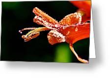 Orange Cape Honeysuckle Bush Blossom Greeting Card