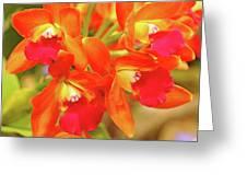 Orange Cattleya Orchid Greeting Card
