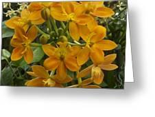 Orange Cluster Greeting Card