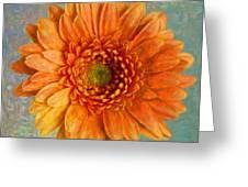 Orange Color Stroke Gerber Daisy Greeting Card