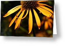 Orange Coneflower Greeting Card