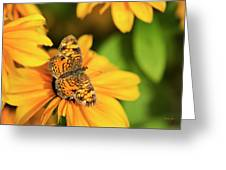 Orange Crescent Butterfly Greeting Card
