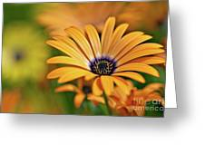 Orange Crush Greeting Card