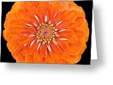 Orange Crush Zinia Greeting Card