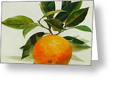 Orange Cueillie Greeting Card