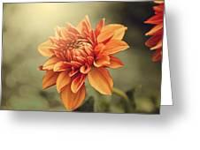 Orange Dahlia Greeting Card