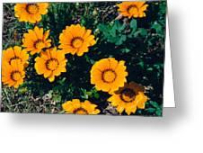 Orange Daisies--film Image Greeting Card
