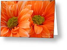 Orange Daisies Paired Greeting Card
