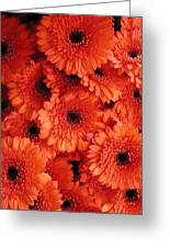 Orange Daisies Greeting Card