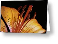 Orange Day Lilly On Black Greeting Card