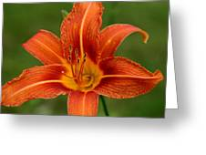 Orange Day Lily No.2 Greeting Card