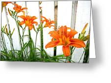 Orange Daylily At Colonial Williamsburg Greeting Card