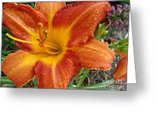 Orange Daylily With Dew Greeting Card