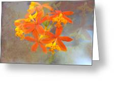 Orange Dream Greeting Card