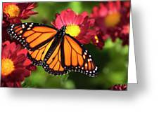 Orange Drift Monarch Butterfly Greeting Card