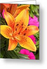 Orange Greeting Card