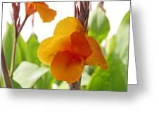 Orange Field Greeting Card