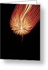Orange Firework Greeting Card