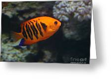 Orange Fish Greeting Card