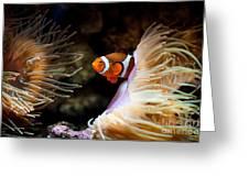 Orange Fish In Sea Anemones Greeting Card