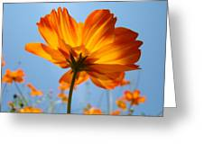 Orange Floral Summer Flower Art Print Daisy Type Blue Sky Baslee Troutman Greeting Card