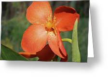 Orange Flower 1 Greeting Card