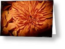 Orange Flower Enhanced 2016 Greeting Card