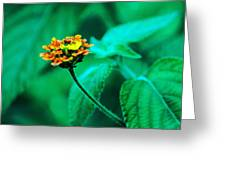 Orange Flower II Greeting Card