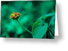 Orange Flower IIi Greeting Card