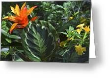 Orange Flower Longwood Gardens Greeting Card